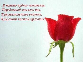 Роза. Я помню чудное виденье открытка поздравление рисунок фото картинка