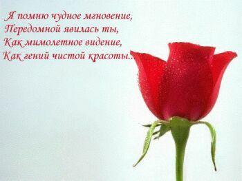 Роза. Я помню чудное виденье открытки фото рисунки картинки поздравления