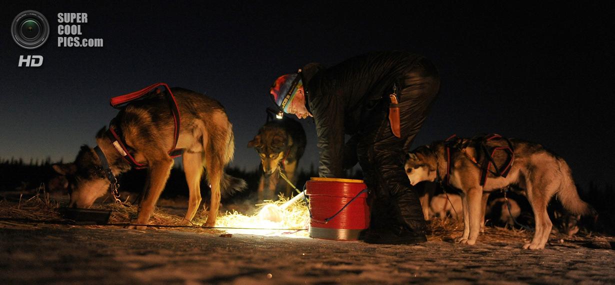 США. Фингер-Лейк, Аляска. 3 марта. Действующий чемпион Митч Сивей кормит своих питомцев. (Bob Hallin