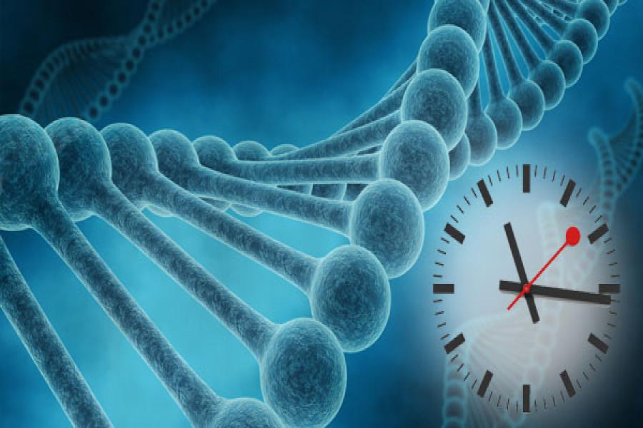 Новый метод визуализации продемонстрировал, как вмозге живого человека активизируются гены