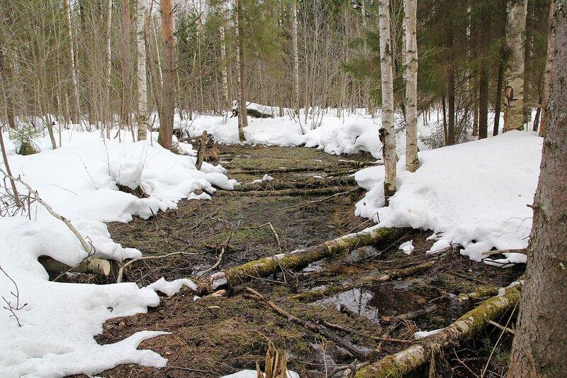 Лесной ручей в Порошино среди заснеженного леса в марте