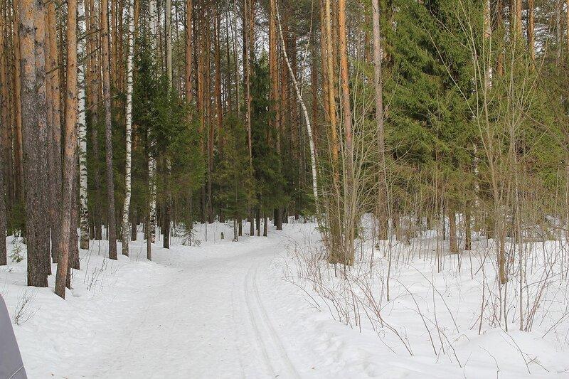 Лыжня между ссоен в Порошино. Тропа на 5 км.