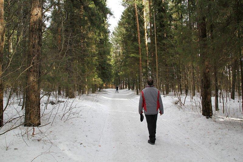 Лучи солнца среди сосен у 5 км лыжни в Порошинском лесу