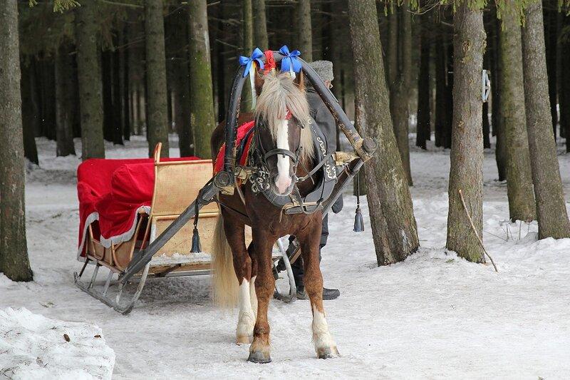 Конь игреневой масти, запряженный в сани