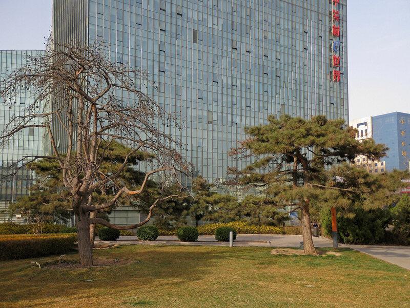 Деревья в парке, Чжунгуаньцунь, Пекин