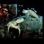 Водоросли, кораллы