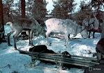 """1942-04-12 Стадо оленей, ожидая """"ЛХТ"""". Примечание: Смотрите черно-белые изображения SA-81889-81893 с информацией. TK граф R фотографии себя, 81907 и 81906 82010. Место: Печенга, Kukkesjaur"""