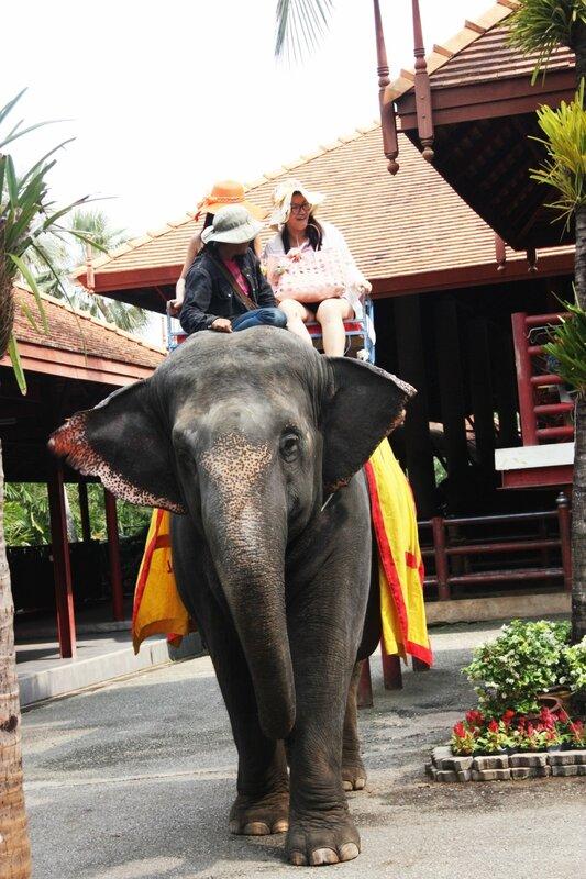 Нонг Нуч, слоны