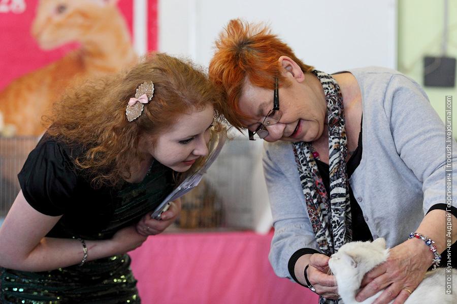 выставка кошек Цветок Сакуры