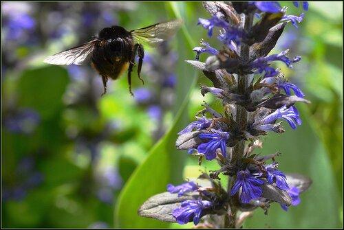 Голубоглазое лето в саду...