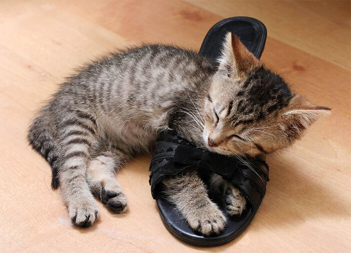 фото спящие коты