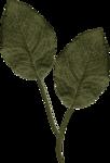 Sky_ATOC_Foliage1.png
