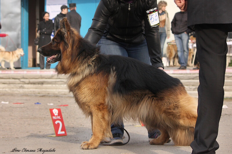 http://img-fotki.yandex.ru/get/9810/225487091.20/0_c6a1b_652daec_XL.jpg