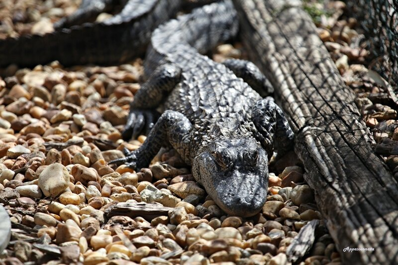 Парк Эверглейдс, США, Флорида, Everglades National Park