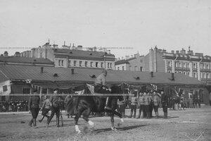 Вид части полигона во время конных состязаний офицер на лошади во время выступления.