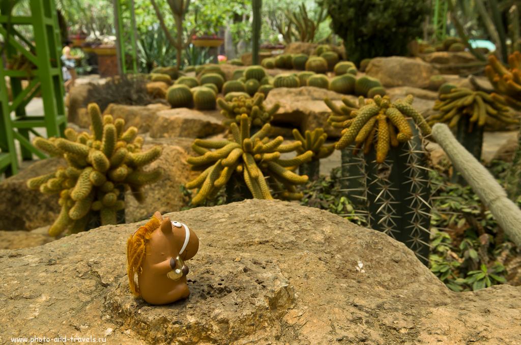 Борис и кактусы в Тропическом саду Нонг Нуч в Паттайе. Отзывы об отдыхе в Китае и Таиланде самостоятельно.