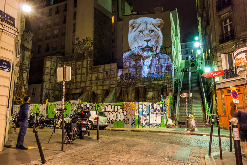 Urban Safari Projections