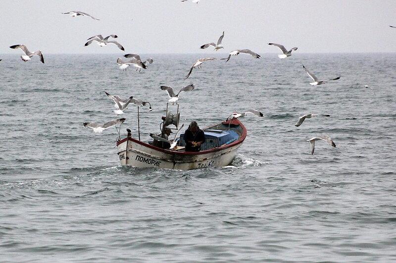 рыбаки и чайки