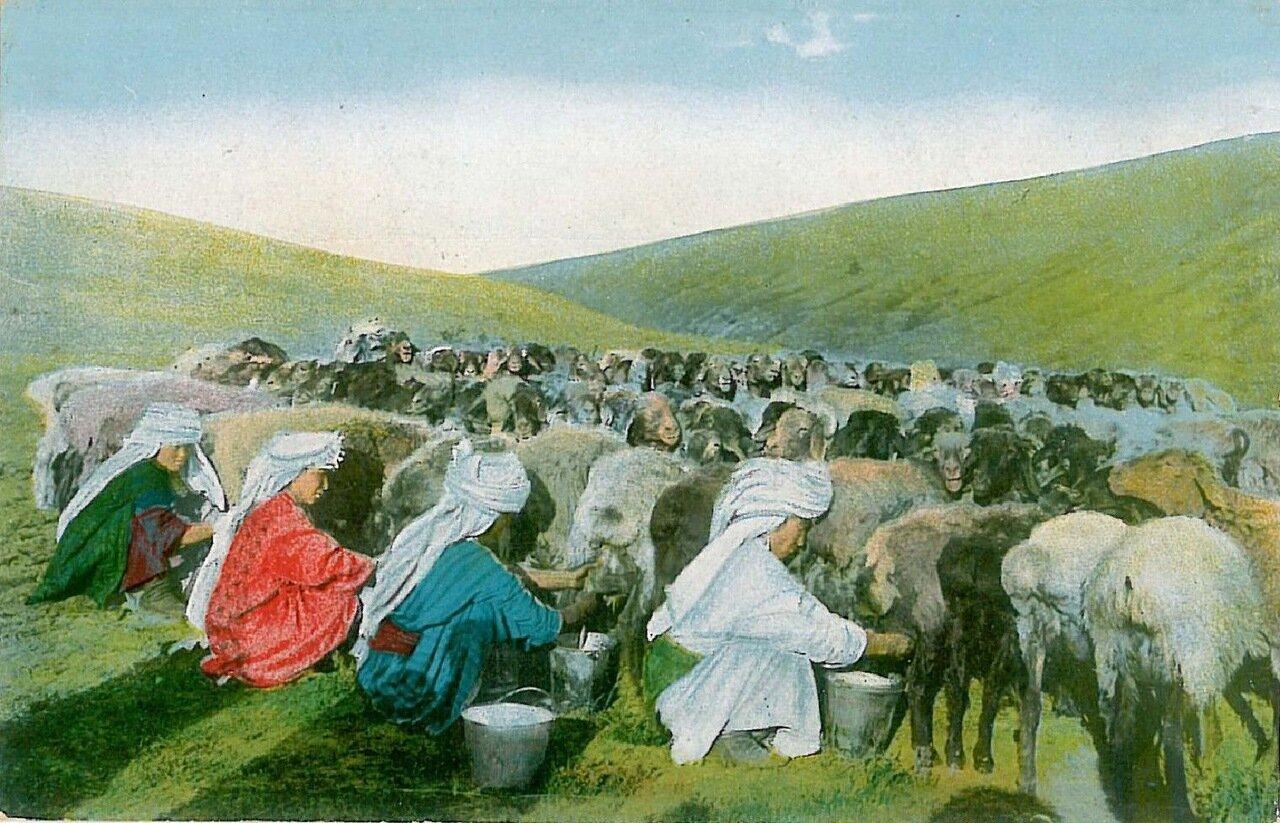 Типы Средне-Азиатских владений. Доение овец
