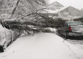 В Кишиневе упавшие деревья повредили 27 автомобилей