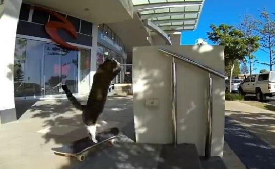 Кошка любит прогулки на скейтборде