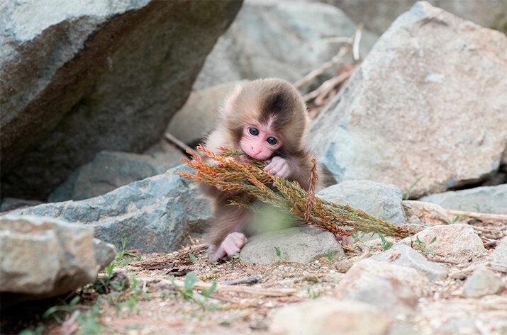 Маленькая обезьянка - животные из дикой природы, интересные кадры