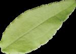 ldw_ShadesofSummer-leaf1.png