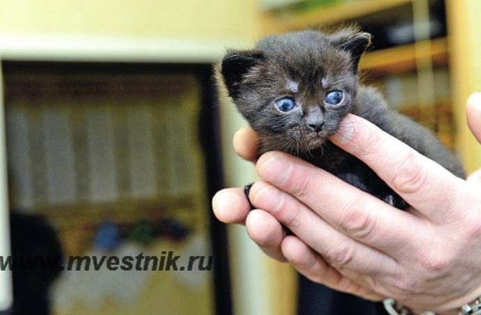 В ревдинской исправительной колонии разрешили держать кошек
