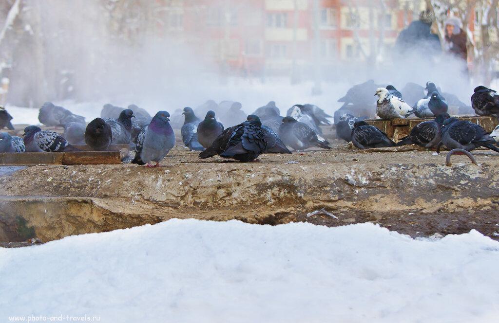 Собрались старички поболтать на завалинке. Погреть свои косточки. Камера Nikon D5100 и объектив Nikon 70-300mm f/4.5-5.6.