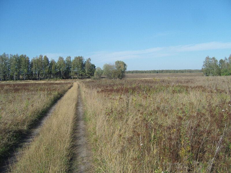 тульские поля, лесополосы... и прелый сладковатый запах