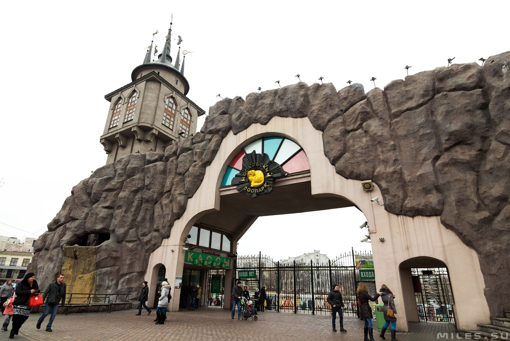 Днем рождения, картинки московского зоопарка распечатать