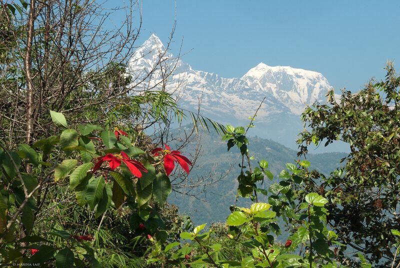 Снежные вершины и цветы