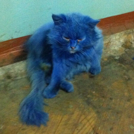 синий кот в твери