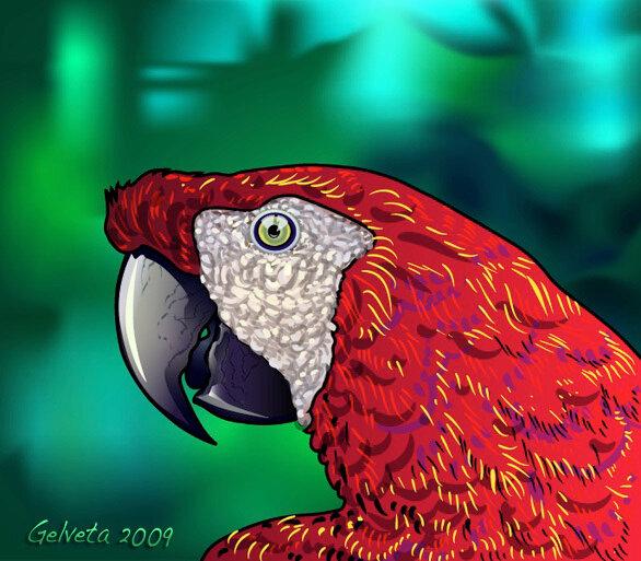 попугай гифка