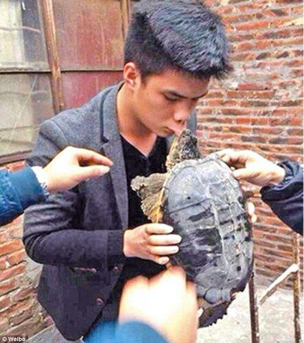 Не целуйте черепах!