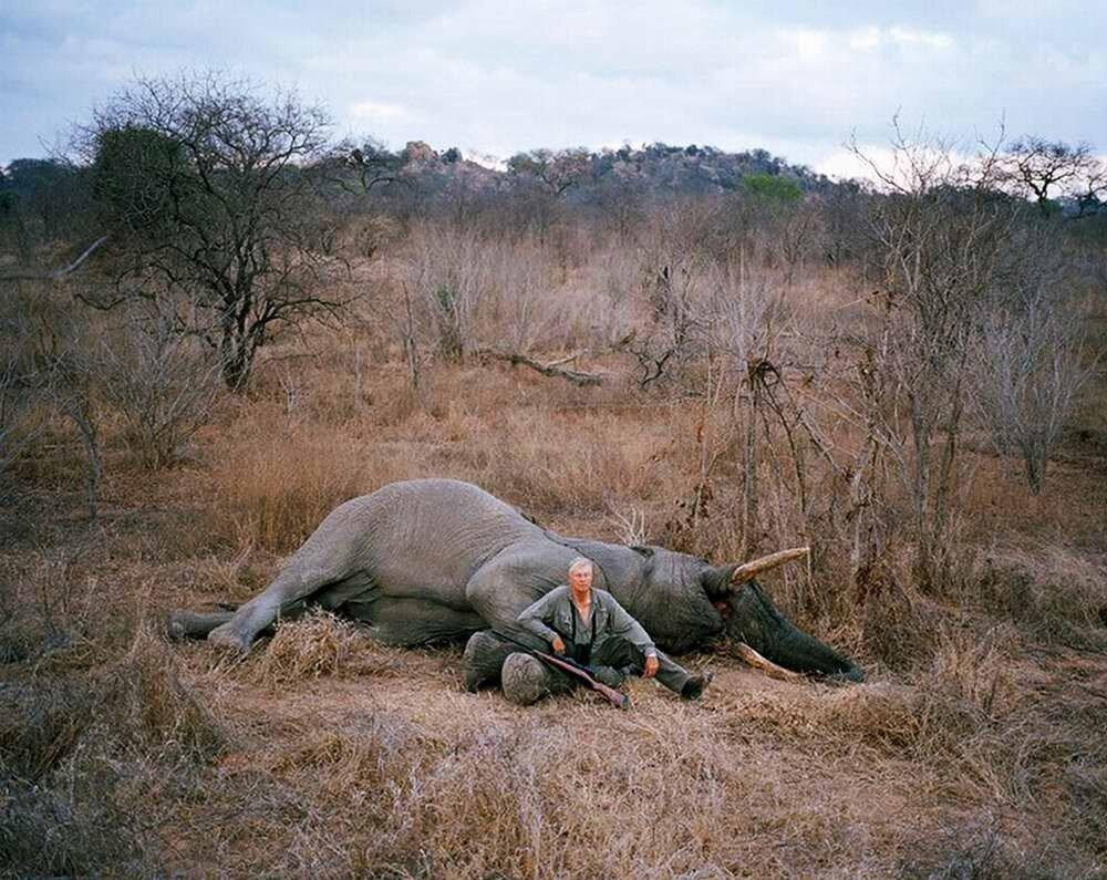 Застреленный на охоте слон, Зимбабве