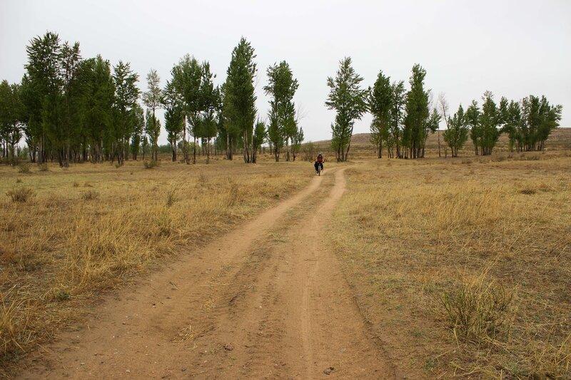 дорога и тополя на плато Ордос, Внутренняя Монголия