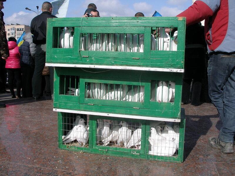 революционные голуби