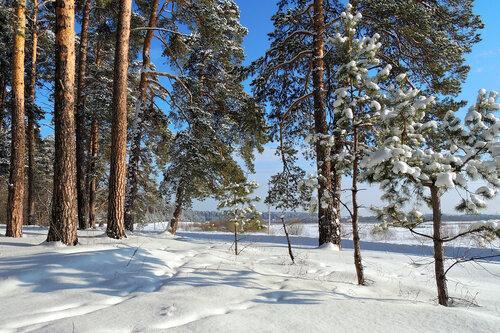 Лес в окрестностях города Шадринск (Курганская область). Автор фотографии - Светлана Медведева.