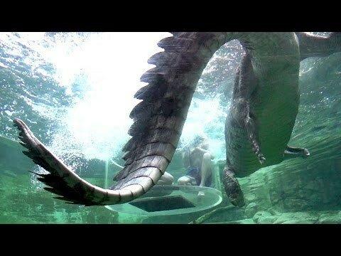 Крокодилы умеют летать
