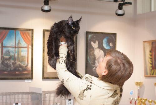 """Международная выставка кошек AFC """"Удивительные лесные кошки"""", 1 марта 2014 г. Сургут 0_b25cc_8d1e92b8_L"""