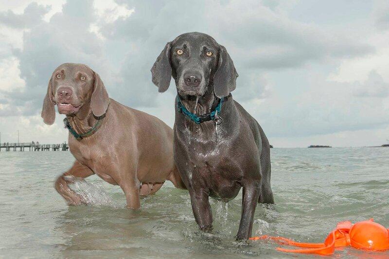 собаки на пляже