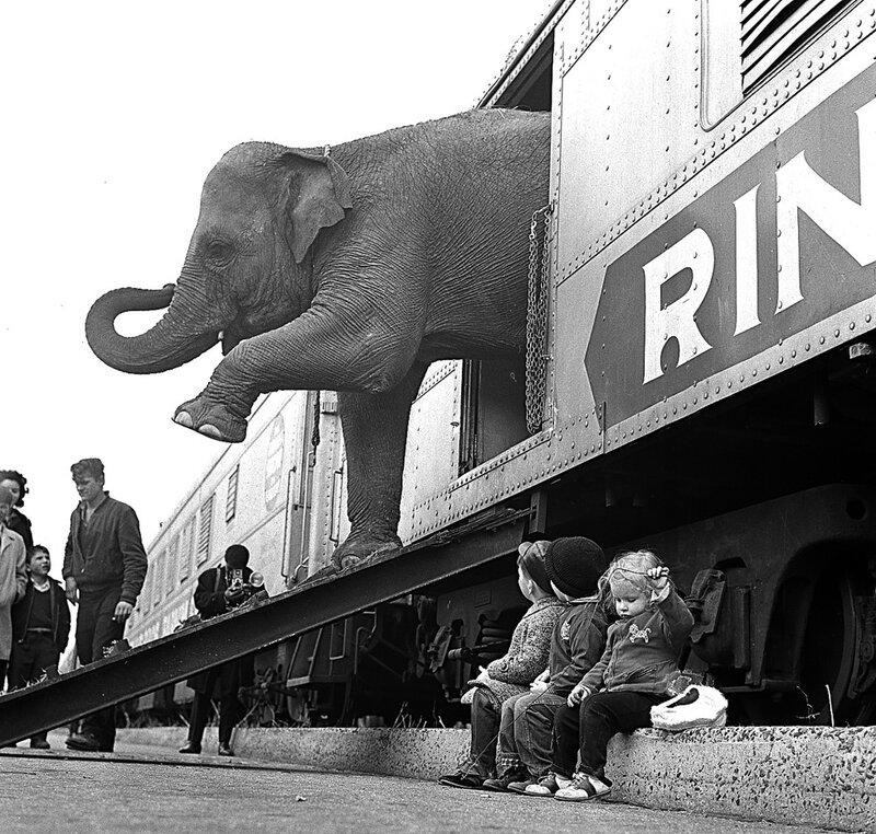 Un elefante del circoRingling Brothersscende dalla carrozza di un treno nella ferrovia del Bronx, a New York, 1 aprile 1963. Il circo rimase aperto ai giardini di Madison Square per 40 giorni, presentandosi comeThe Greatest Show on Earth, il più grande