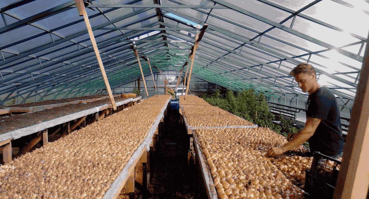 Выращивания зелени на продажу в домашних условиях