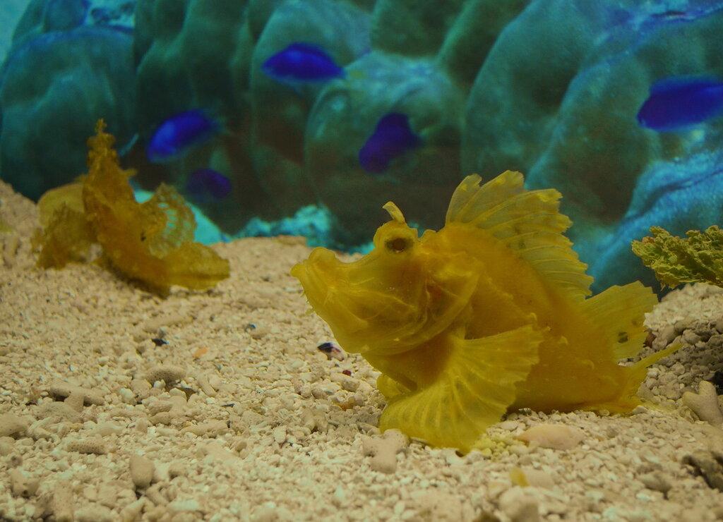 Фото 2. Достопримечательности Шанхая. Рыбки в шанхайском океанариуме. Параметры съемки на камеру Nikon D5100 KIT 18-55: выдержка 1/60 сек.; диафрагма f/4.5; фокусное расстояние 30 мм; ИСО 720; вспышка отключена.