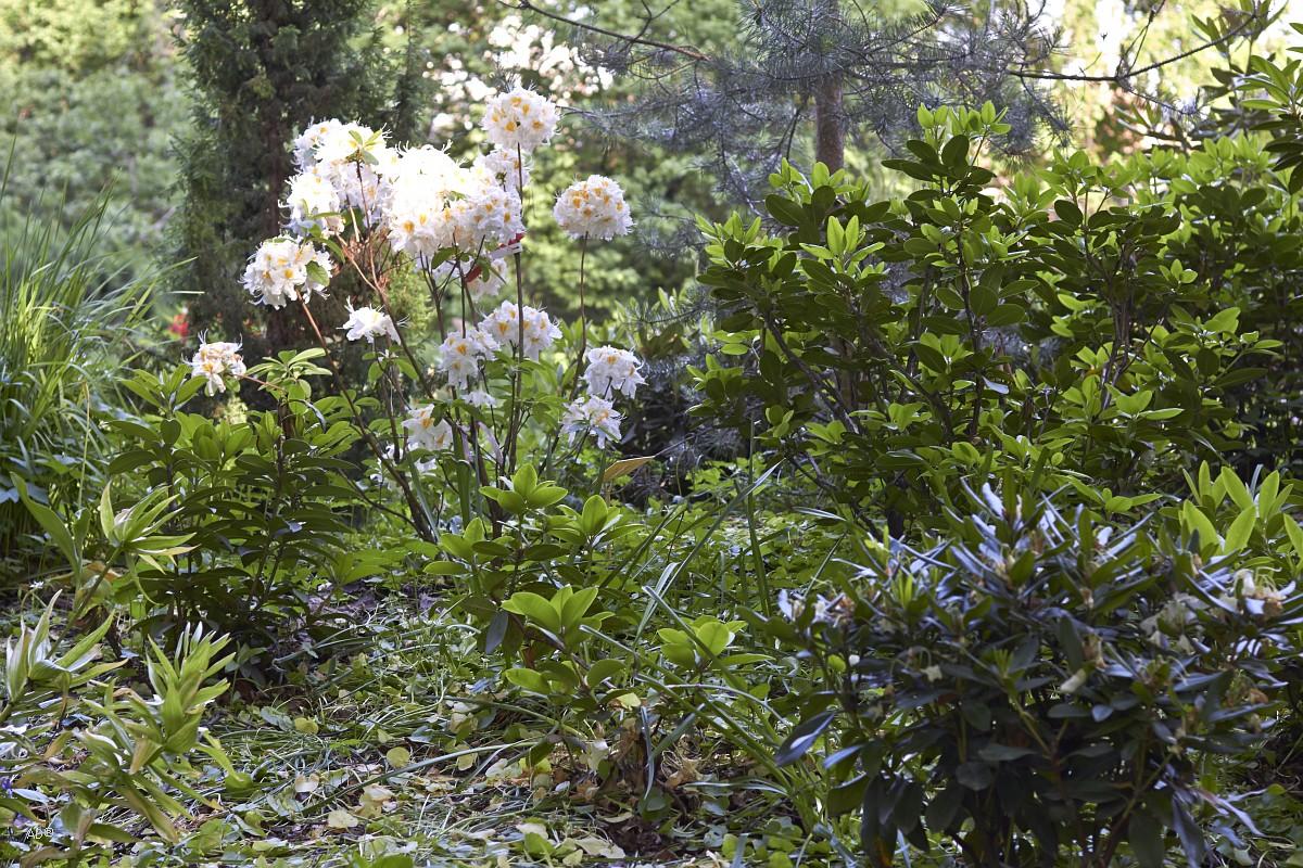 Ботанический сад на пр. Мира