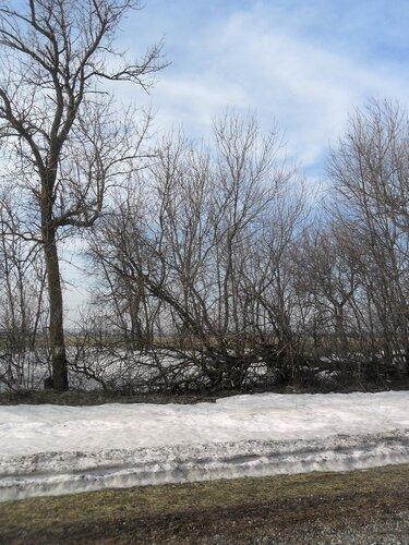 Снежное у дороги...