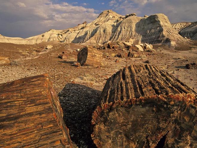 Национальный парк Петрифайд-Форест. США