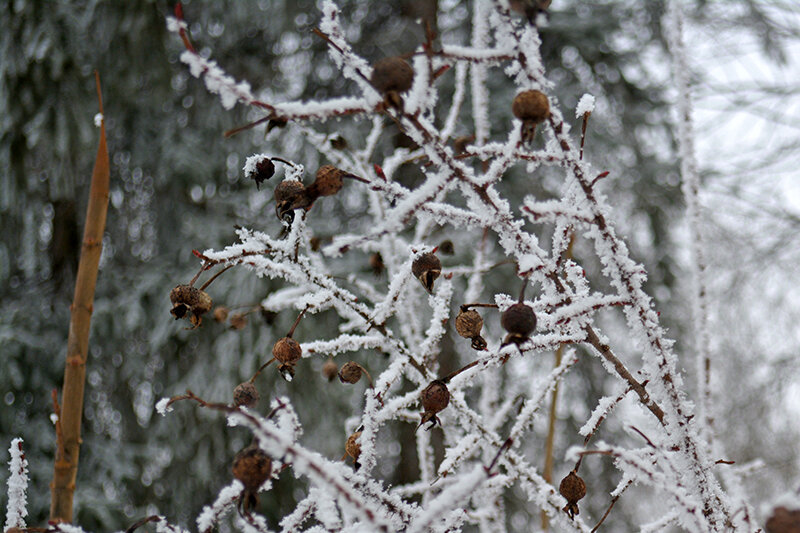 вновь зима3