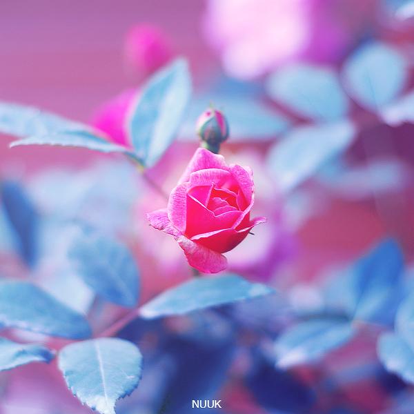 Красивые картинки цветов нежных
